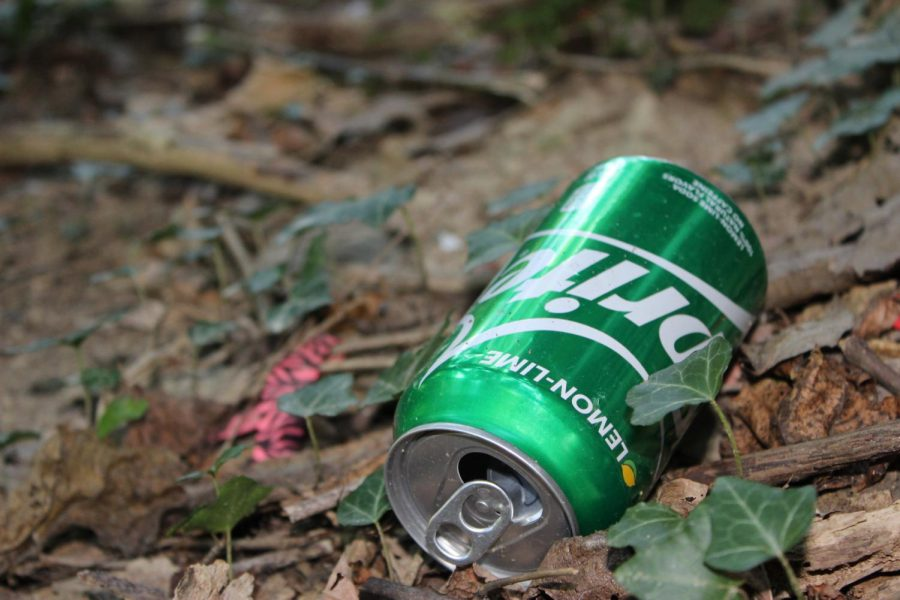 An empty Sprite can resides amongst the new plant growth.