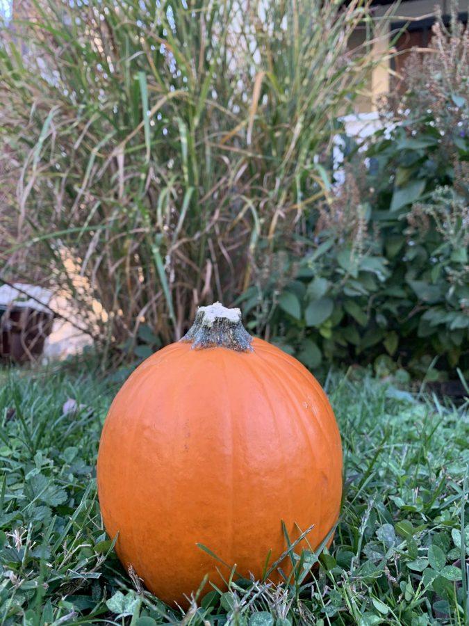 Five fun festivities to enjoy over fall break