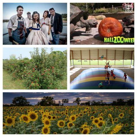 Five fun fall festivities