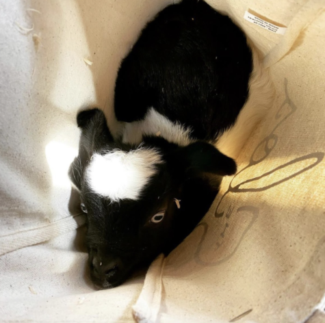 Ruth Bader Goatsburg in the tote sitting for a picture.